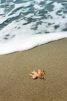 leaf on beach